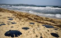 Boulettes de pétrole: 8 communes et 24 plages touchées, plainte du maire de Ramatuelle