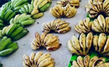 Un nouveau point de vente de fruits et légumes locaux à Papeete