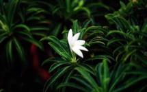 Une étude pour mieux connaître le champignon menaçant nos plantes