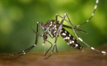 Une étude sur la dengue en Indonésie porteuse d'espoir pour contenir le virus