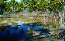 Carnet de voyage à Fakarava : dans les tièdes mares à kopara