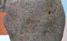 L'étrange pierre retrouvée sur un plateau de Taravao en décembre 2000, pèse près de 8 kilos. Mais s'agit-il comme le prétend son propriétaire, d'une météorite ?