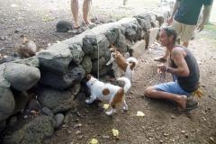 Ua Huka-Chasse au rat polynesien-Hane1