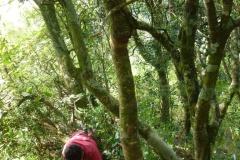 Ravahere Taputuarai compte les plantules dans la parcelle de forêt naturelle. Crédit : JYM.