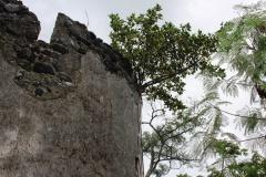 Le fortin est envahi par la végétation. La société à l'œuvre va s'en débarrasser.