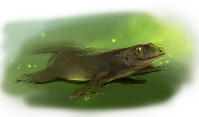 Gecko océanien
