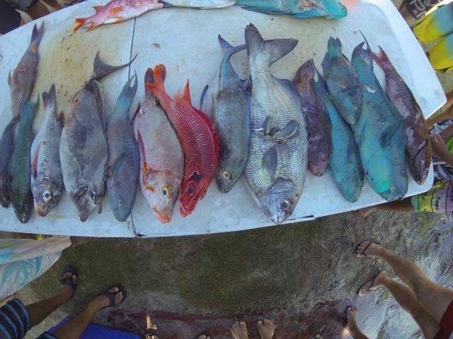 La pêche de Michel WILLIAMS lors de la première journée