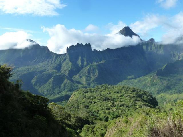 Vue du plateau de Maraeti'a. Les vestiges de la forêt naturelle sont en bord de plateau, en fond d'image. Crédit : JYM.